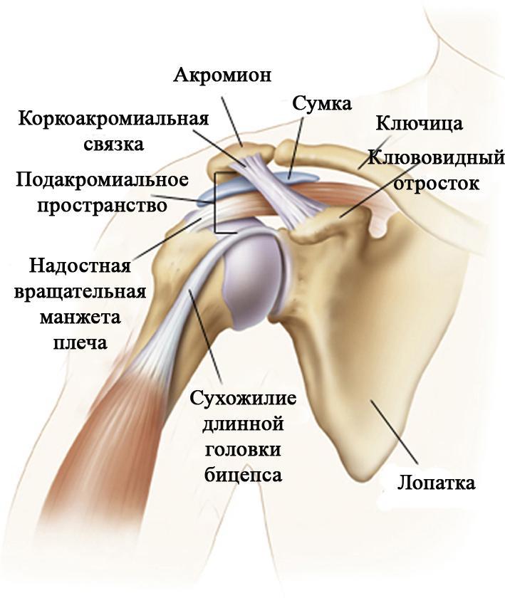 Лечение боли в плечевом