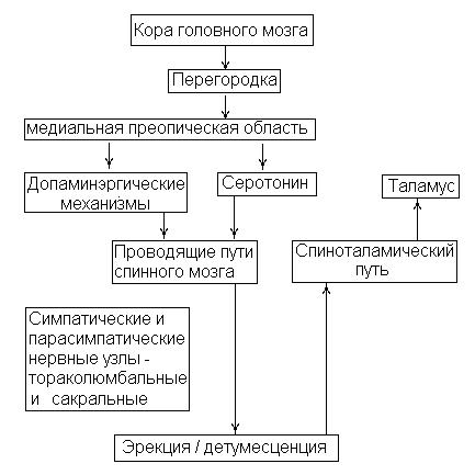 Вегетативная нервная система.