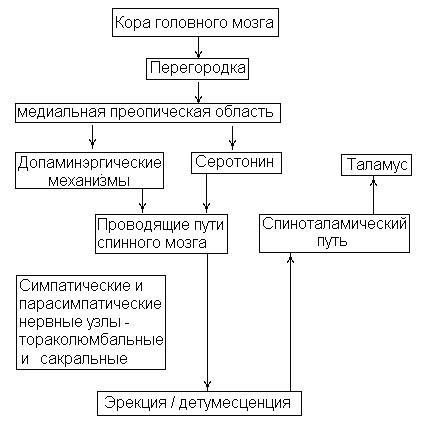 механизмы (центральные Д2