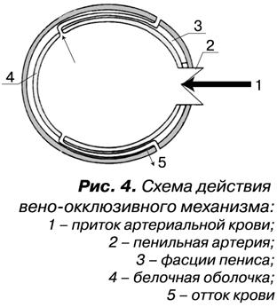 кольцо для усиления эректильной функции