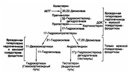 Как простимулировать сперматогенез на фоне терапии андрогенами