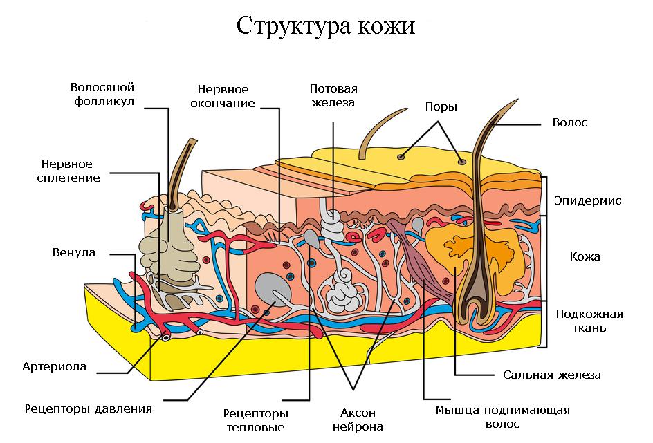 Другие услуги клиник дерматологии